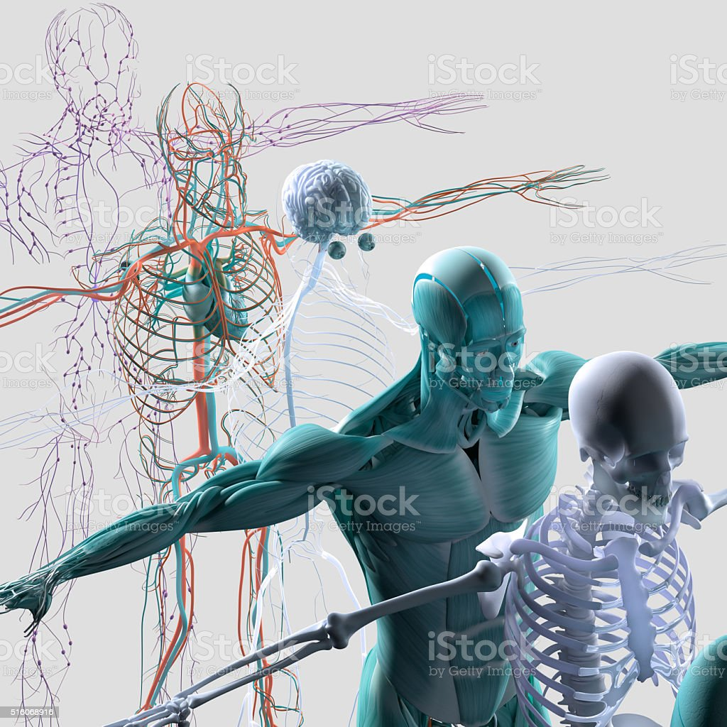 Human anatomy exploded view, deconstructed showing separate parts,...