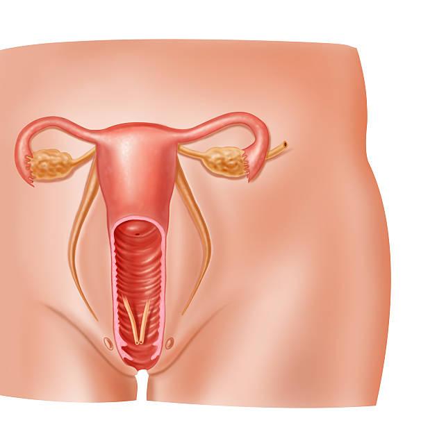 Шлюху внутренний органов женщины видео порно смотреть
