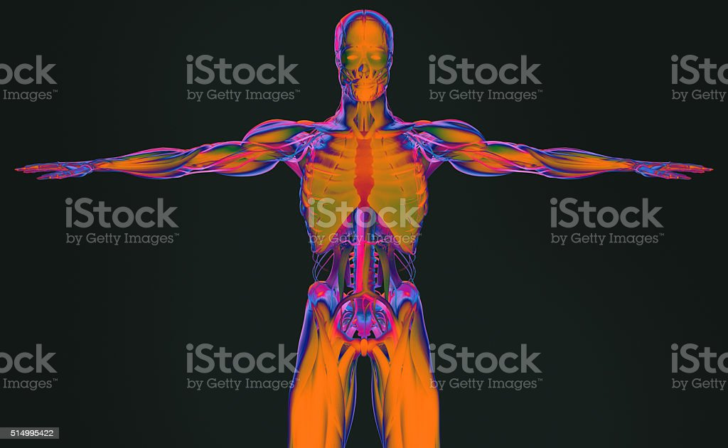 Anatomy  futuristic scan technology. Torso front. Vibrant colors. Xray-like. stock photo