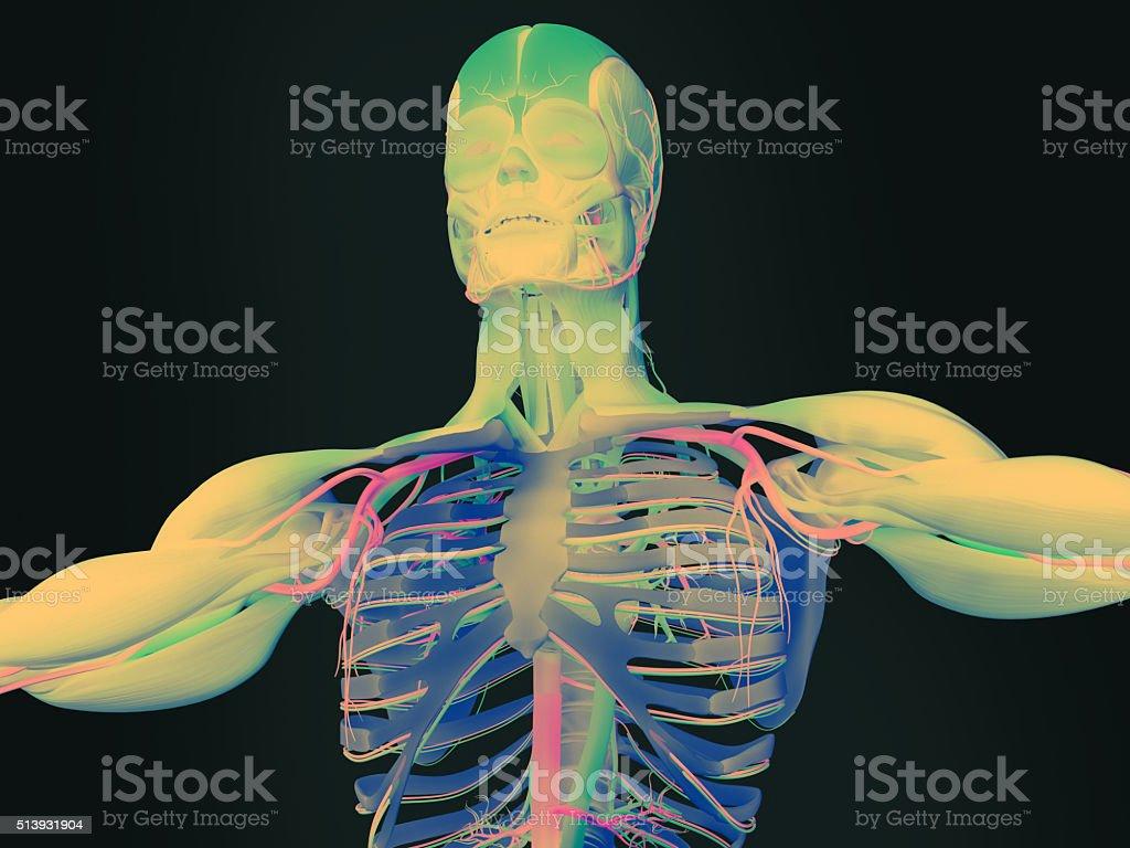 Anatomie Futuristischen Technologiescan Hand Und Arm Lebhaften ...