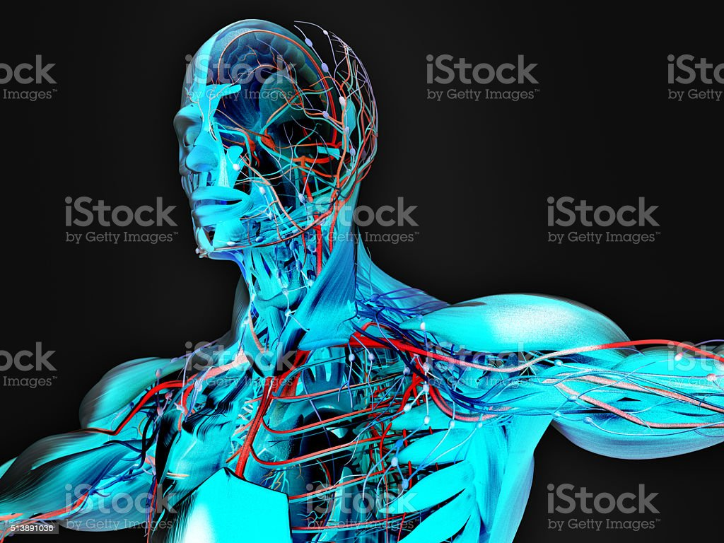 Anatomy  futuristic technology scan.Head cross section showing brain. Vibrant colors. stock photo