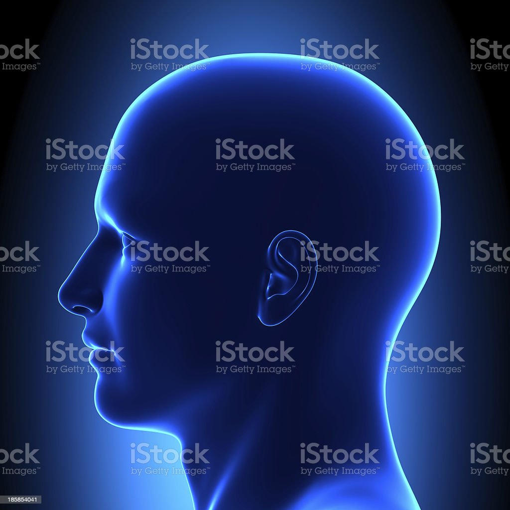 Anatomy Head - Side View Blue concept stock photo