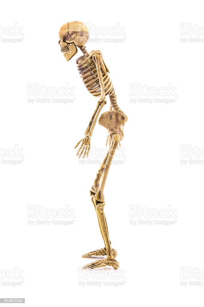 Anatomy Left Side Body Skeleton Human Isolated Stock Photo More