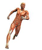 istock anatomy man 3 139666623
