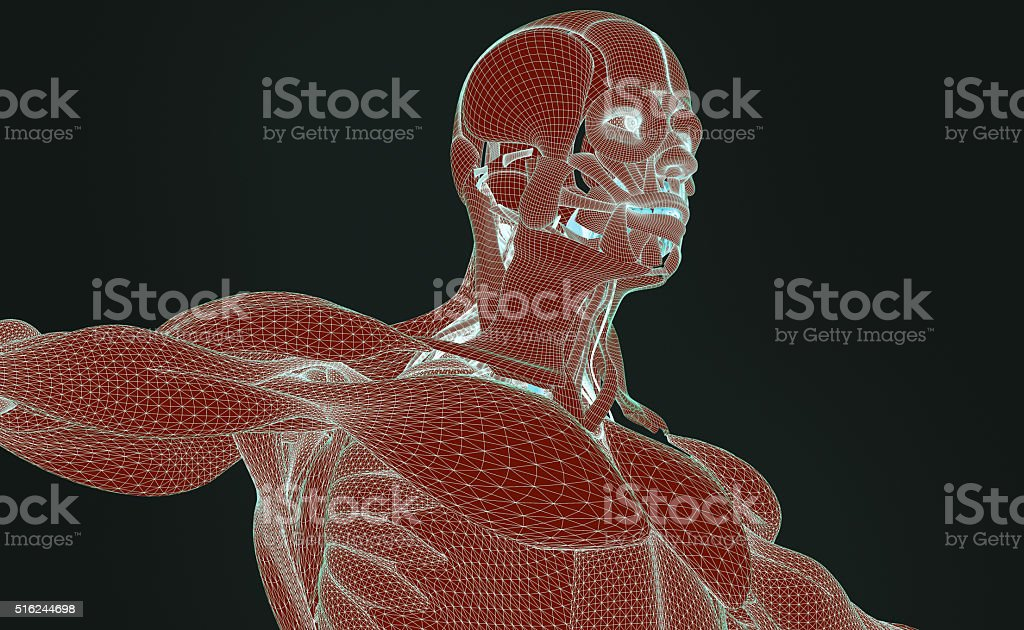 Anatomy Man Wireframe Texture Futuristic Interface Body Scan