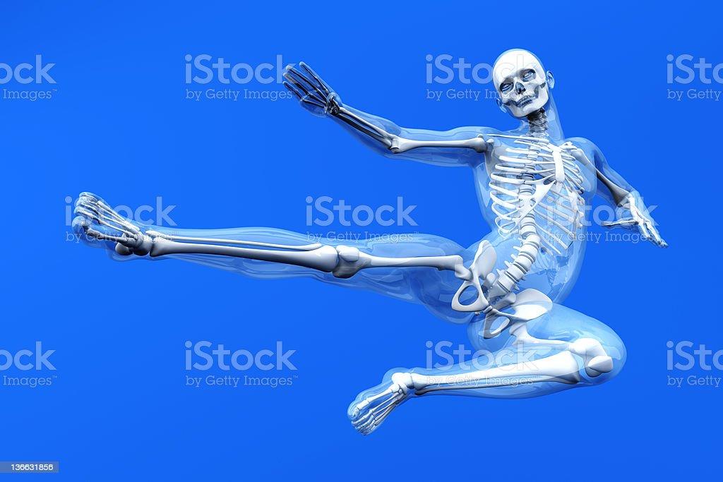 Anatomy -  Martial Arts royalty-free stock photo