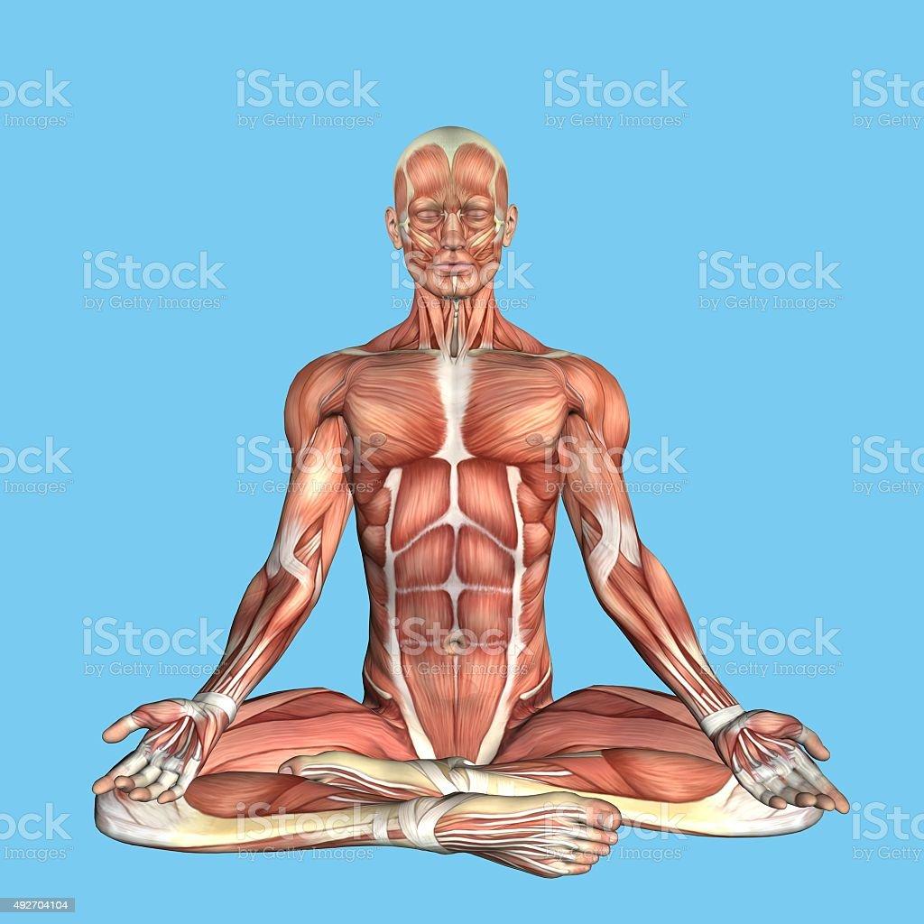 Fotografía de Anatomía Tranquilos Postura y más banco de imágenes de ...