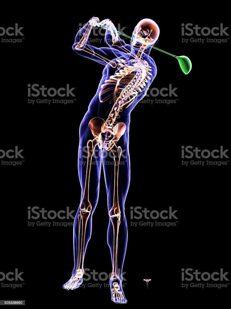 Fotografía de Anatomía De Golf Para Batear y más banco de imágenes ...