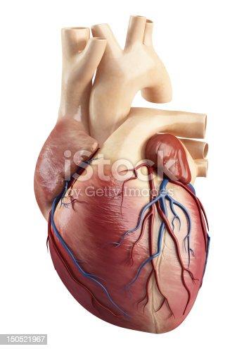 istock Anatomy of heart interior structure 150521967
