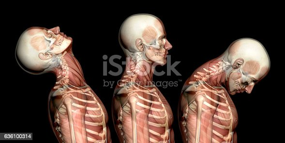Anatomy of human body, showing neck injuries like whiplash effect. With muscles and skeleton. Side view.  Isolated on white background. Great to be used in medicine works and health.