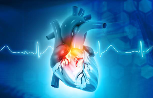 Anatomy of Human Heart stock photo