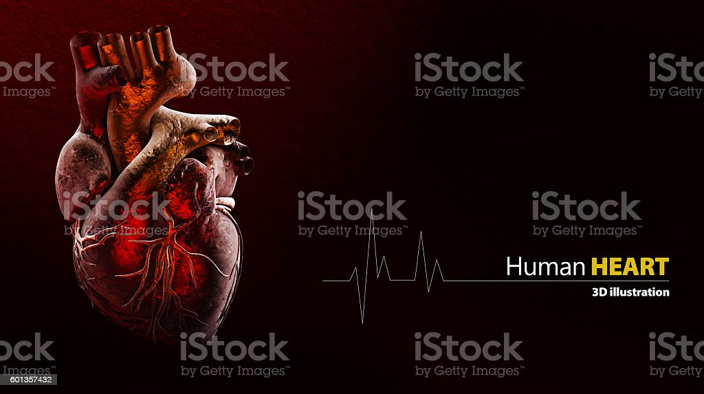 Anatomy of Human Heart stock photo