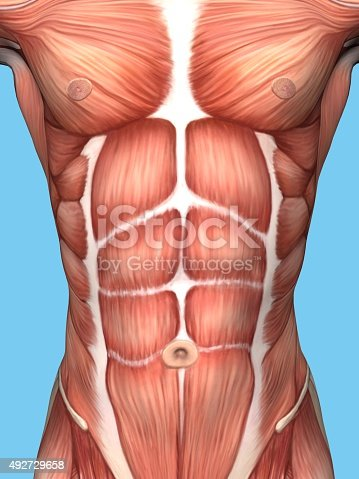 istock Anatomy of male chest and torso. 492729658