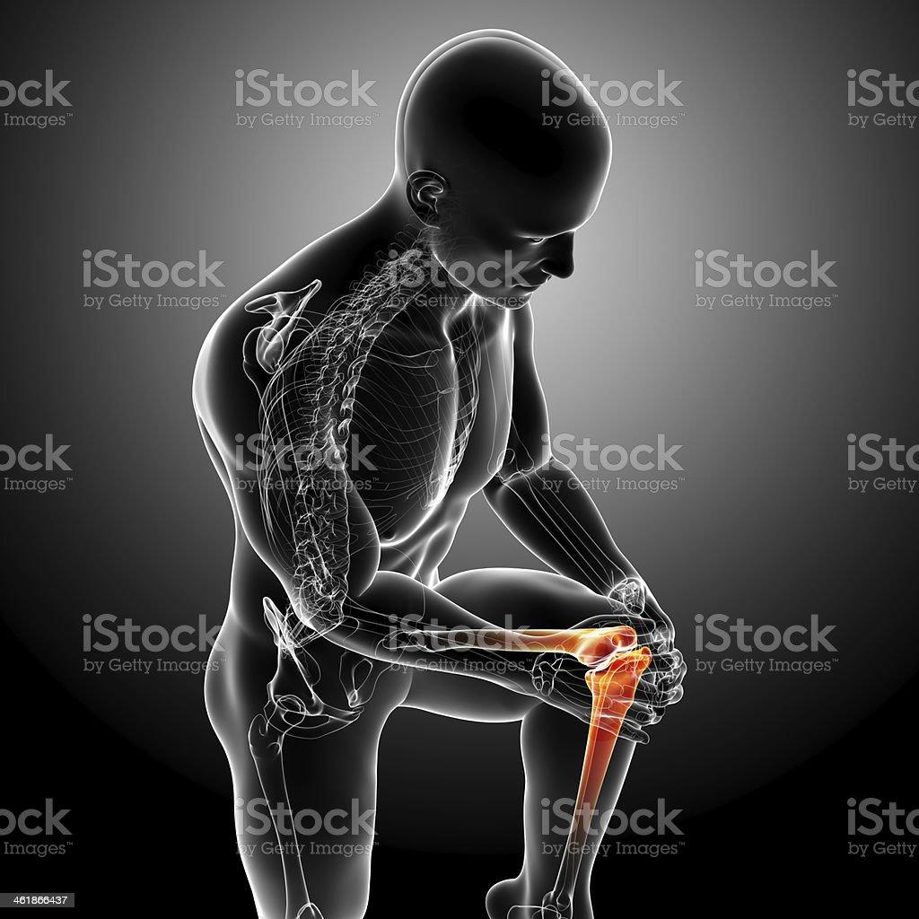 Anatomy Of Male Knee Pain stock photo | iStock