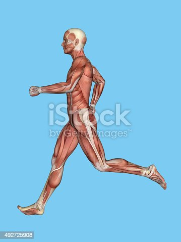 496193187istockphoto Anatomy of Male Motion 492725908