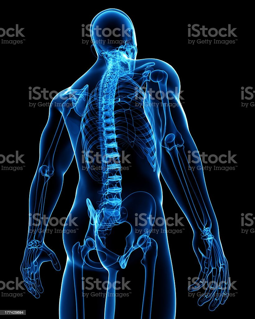 Anatomy of male skeleton back view royalty-free stock photo