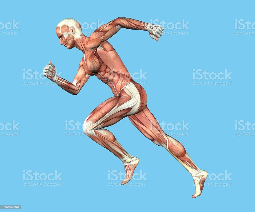 Anatomy Of Man In Running Sprint Motion Stock Photo More Pictures