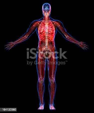 istock Anatomy of the human body 164132060