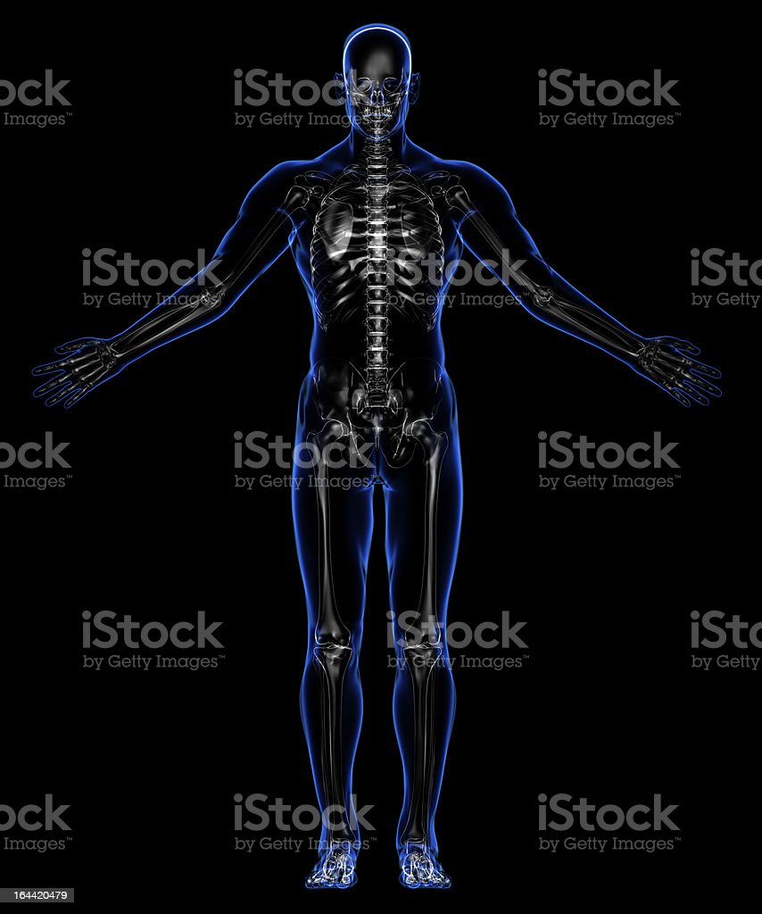 The contours of the human skin and skeleton.