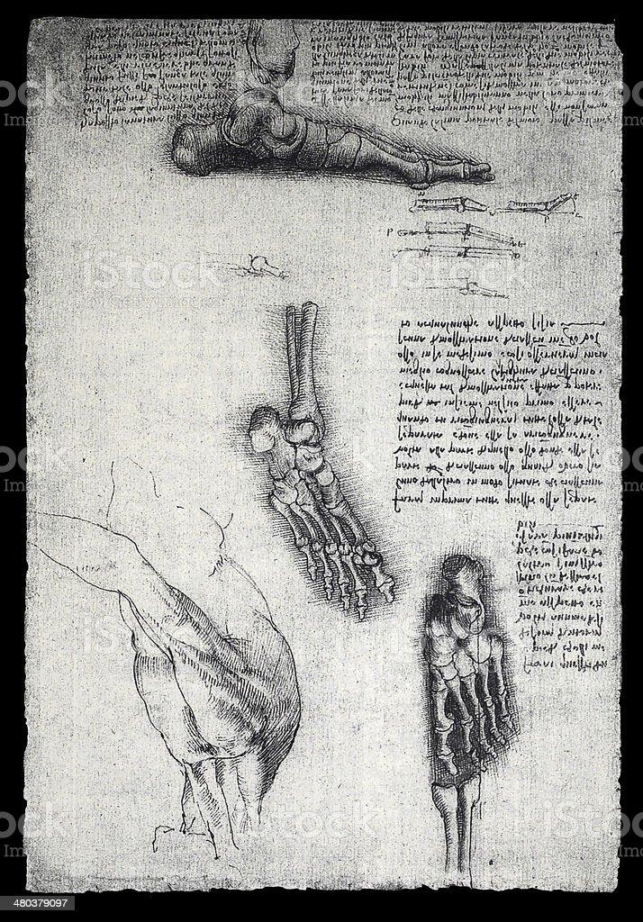 Anatomy stock photo