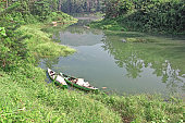 Two country fishing canoes, made of fiber, anchored in backwaters of Periyar River in Kerala, India