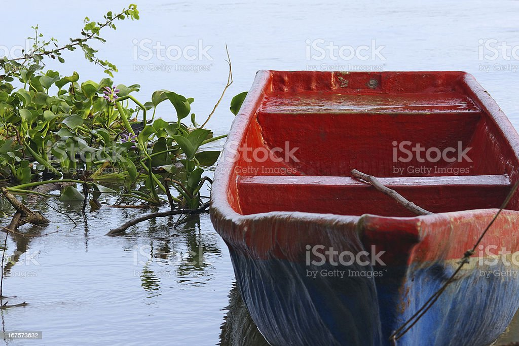Anchored Red and Blue Small Boat and Water Hyacinths royalty-free stock photo