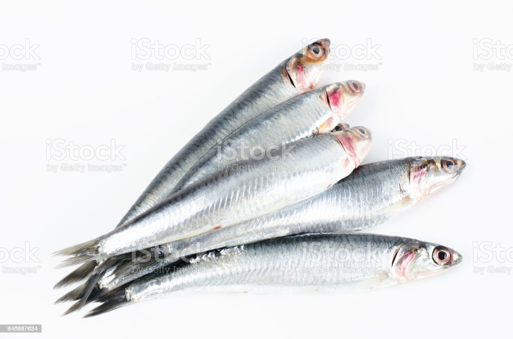 Anchovies on white background. stock photo