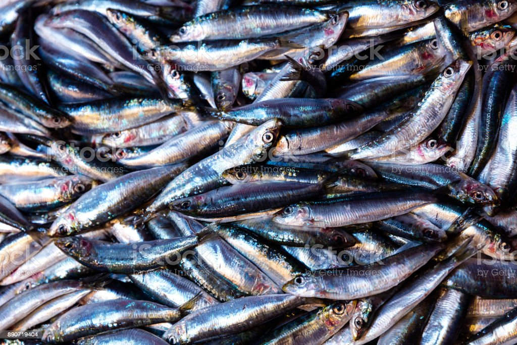anchovy anchovy fish stock photo