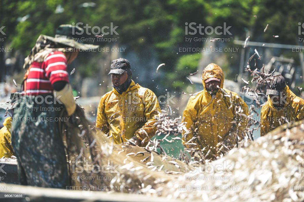 Anchovy Fishermen stock photo