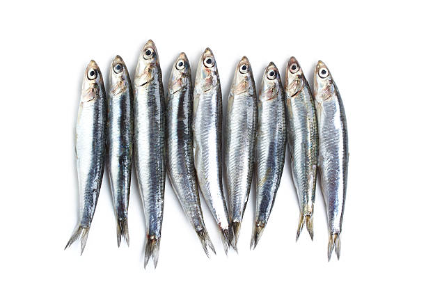 Anchovy Fishes isolated on white anchovy stock pictures, royalty-free photos & images