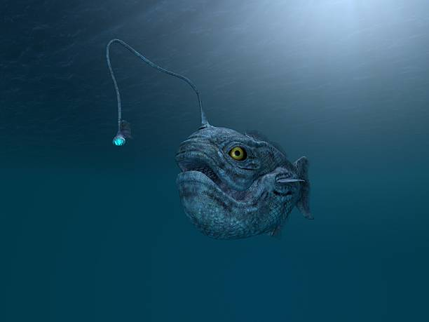 antica pesce pescatore - under the sea fish foto e immagini stock