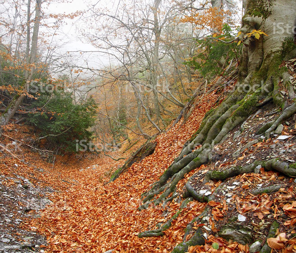 Ancient autumn forest - Royalty-free Antiek - Toestand Stockfoto