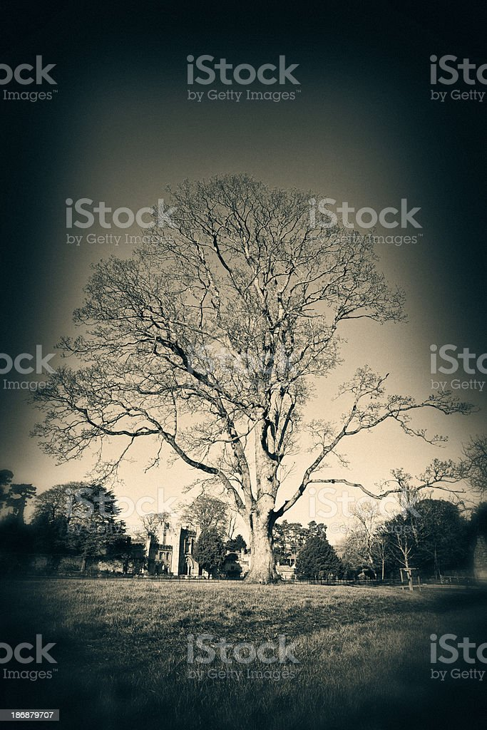 Ancient Bare Tree royalty-free stock photo