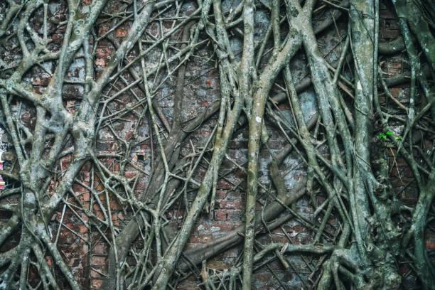 ancient brick wall - wood texture zdjęcia i obrazy z banku zdjęć