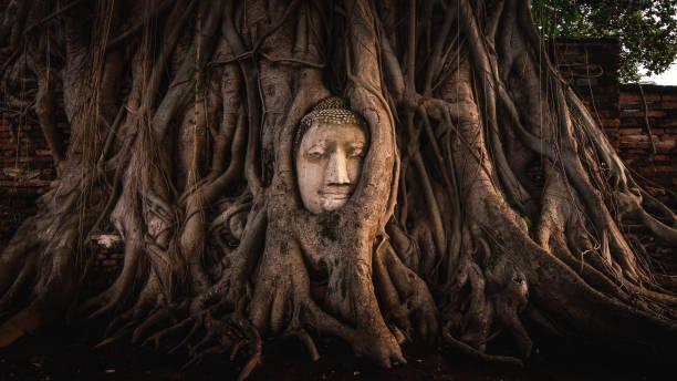 antik buda yüz - ayutthaya bölgesi stok fotoğraflar ve resimler