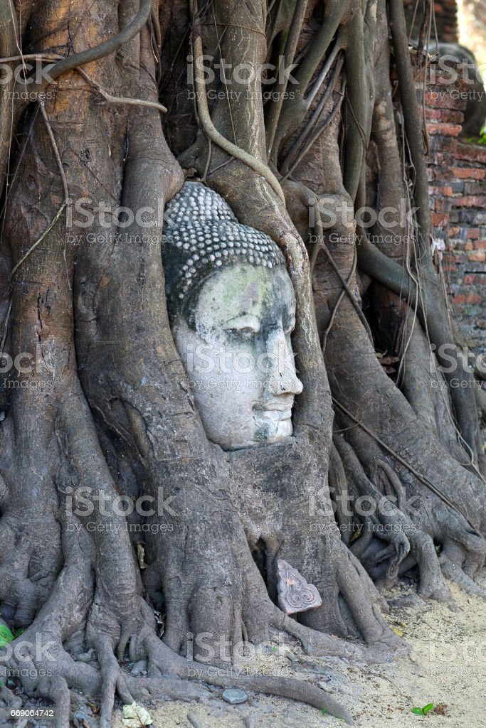 Ancient Buddha's Head in Tree Roots in Ayutthaya, Thailand - foto de stock