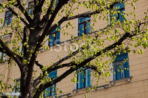 Ancient buildings with beautiful windows are standing on the street. Spring twigs of trees