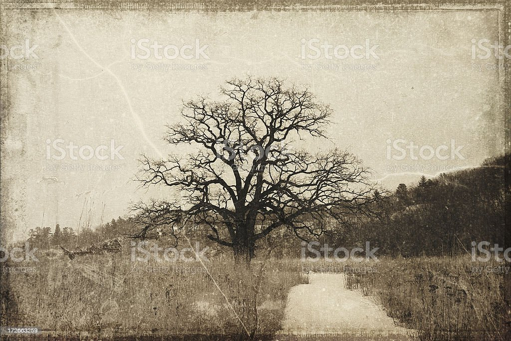 Ancient Burr Oak on the Prairie royalty-free stock photo