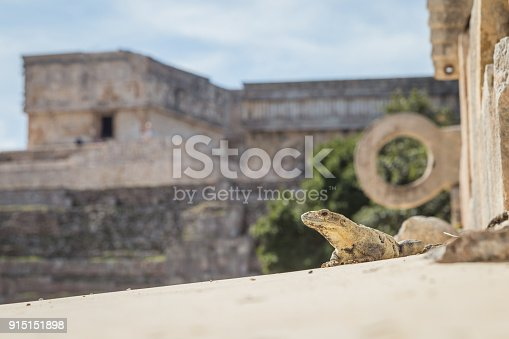 istock Ancient city in the jungle. Mayan temple Uxmal archeological site, ruins in Yucatan. Pyramid of the Magician (Piramide del adivino) in ancient Mayan city Uxmal, Mexico 915151898
