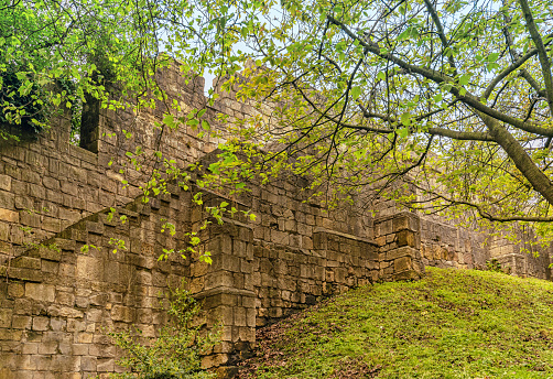 York, UK. May 28, 2021. A section of the famous York city walls.  The wall stands on a sloping grass bank and a tree with Spring foliage is above.