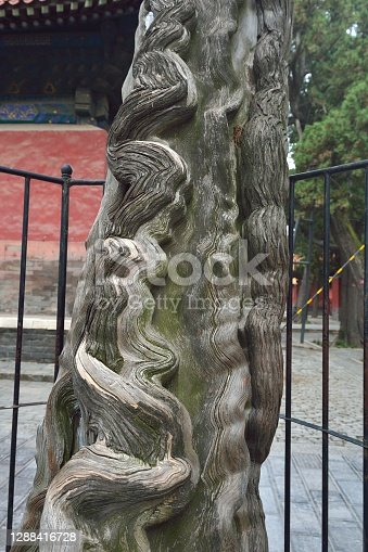 China,Yunnan,Jianshui county,Temple of Confucius. It was built in 478 BC as a shrine to Confucius, a famous ancient Chinese thinker and educator. It is a world cultural heritage site and AAAAA level tourist attraction in China. These cypress trees are more than two thousand years old.