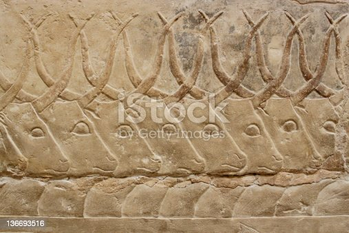 istock ancient egyptian engravings depicting bulls on a mastab wall 136693516