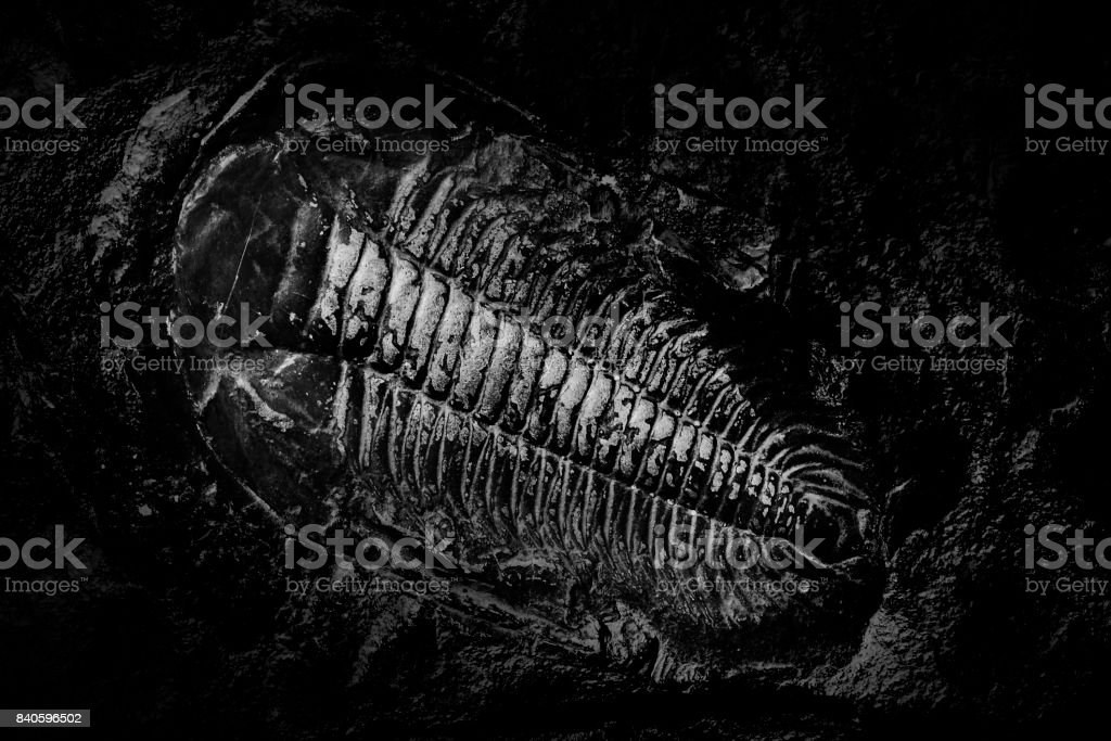 Ancient fossil of prehistoric animal. stock photo