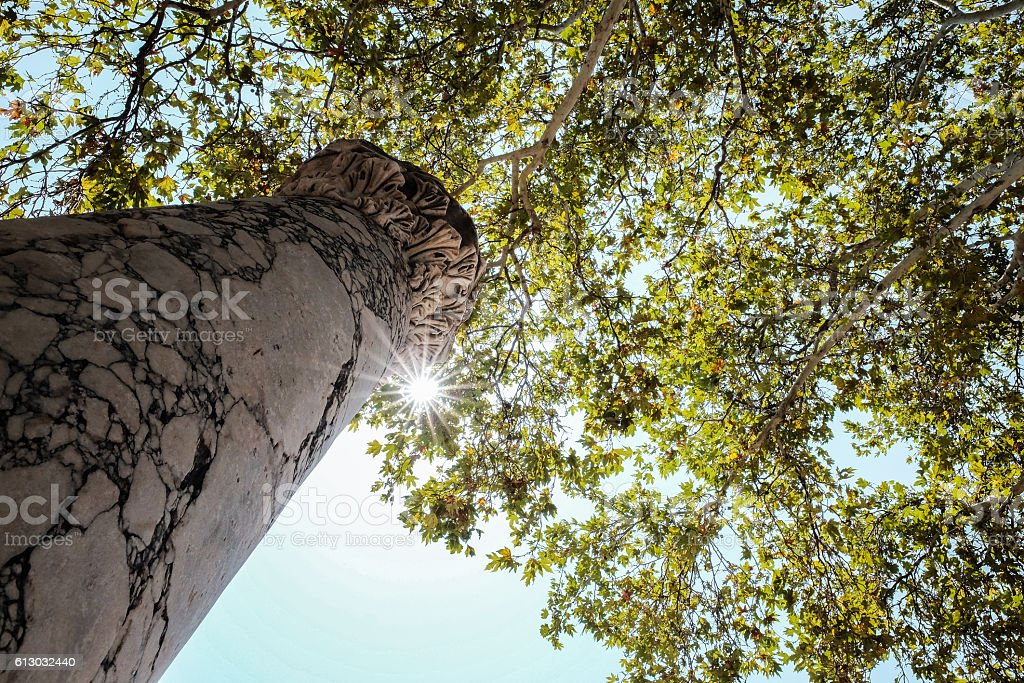 ancient greek column under hyppocrates plane tree in kos greece stock photo