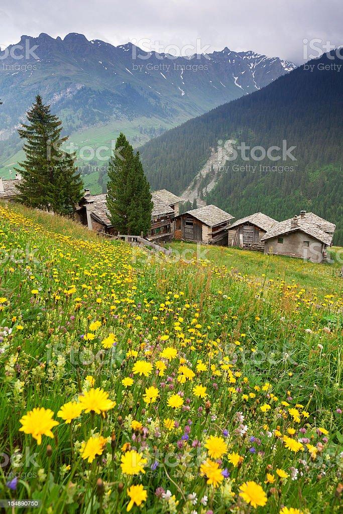 ancient hut in graubuenden-switzerland - summer meadow stock photo