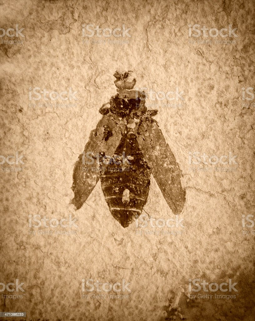 Ancient Insect Fossil stock photo