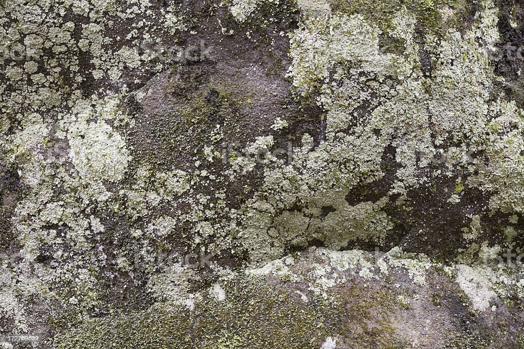 Ancient lichen pattern on boulder stock photo