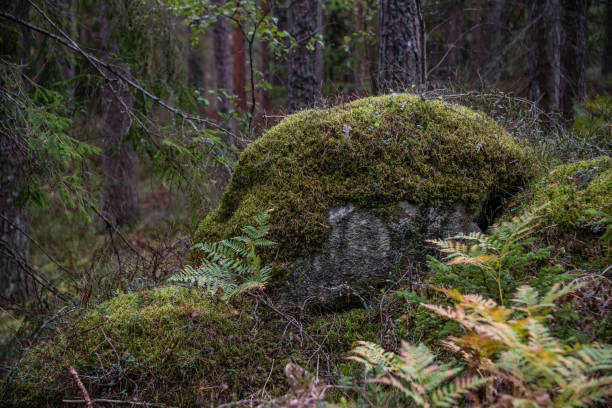Ancient Moss Covered Boulder in a Deep Green Forest in Northern Europe - foto stock
