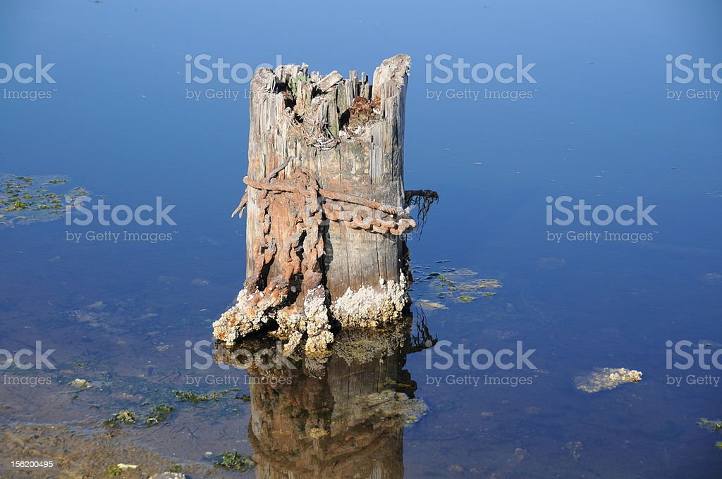 Ancient piling for boats royalty-free stock photo