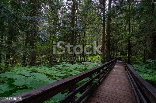 Ancient Forest/Chun T'oh Whudujut Provincial Park, British Columbia, Canada